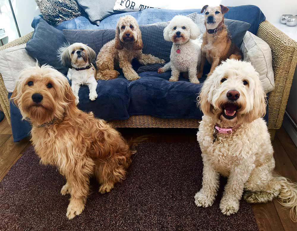 Dogs enjoying company on the sofa