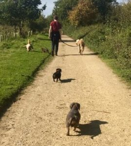 Dogs enjoying an Essex-Wags walk