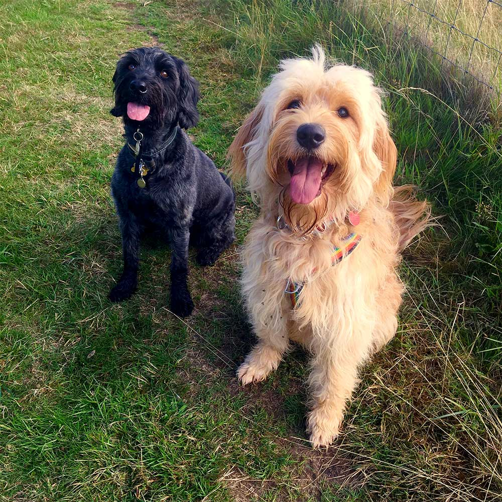 Two happy Essex-Wags dogs